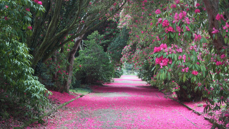 Broad Walk Kilmacurragh